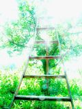 Orcharddmv