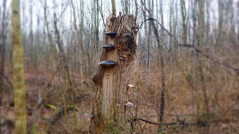Treefung