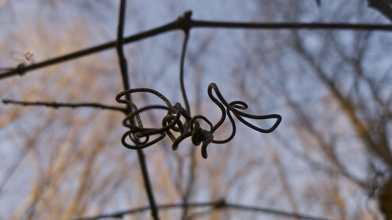 Natureknot.lopez.copyright